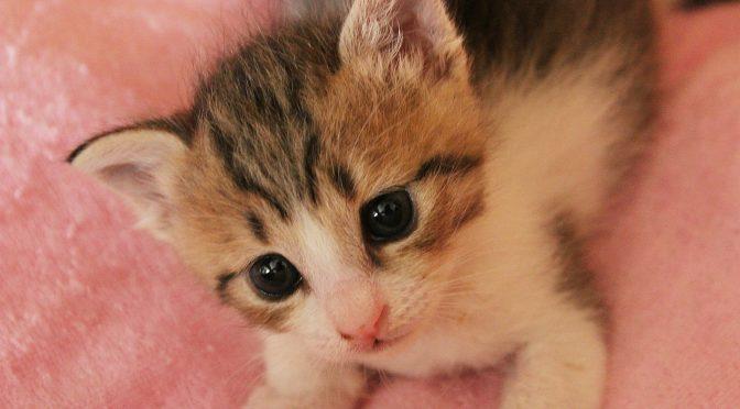 ペットロス質問箱「愛猫が亡くなり嘔吐するのは、ペットロスの症状?」