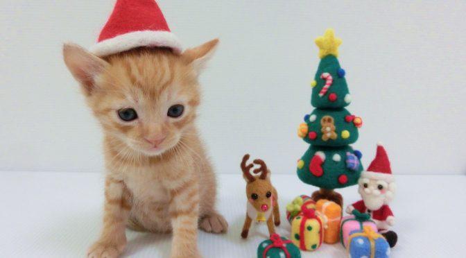 ペットロス相談「ペットを見送った後のクリスマスが辛い!」ママ達の本音