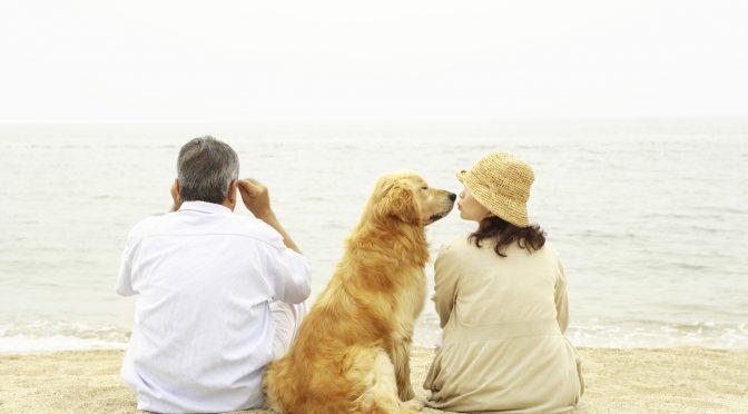 ペットロス・ご主人からのご相談「愛犬を見送った妻の気持ちが理解できない」