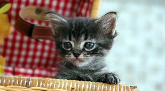 ペットロス体験談「亡き愛猫のトイレを不衛生と言われて涙が止まらない」