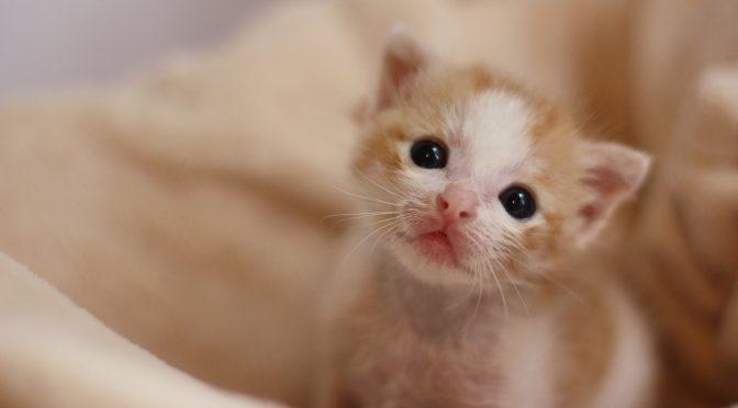 ペットロス:愛猫を見送ったママのお話「周囲の方の言葉に傷ついて···」