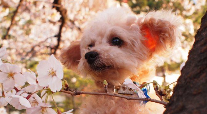 ペットロス質問箱「愛犬が旅立ち、一番好きだった春がくるのが怖い」