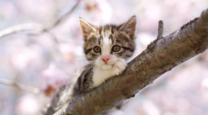 愛猫を見送られたママからのペットロス相談の感想/カウンセリングで出来ること(図解あり)