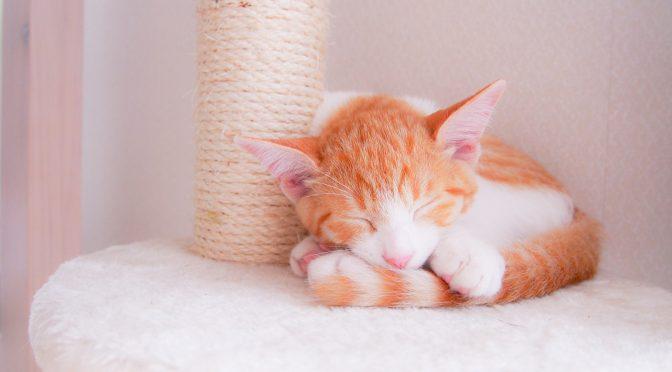 ペットロス体験談「愛猫が突然心臓発作で旅立ち、心に穴が開いたようです」
