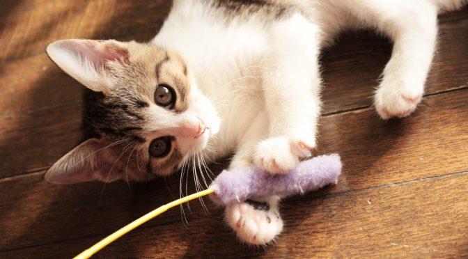 ペットロス質問箱「愛猫を亡くし、夫との温度差が辛い。どうしたら良い?」