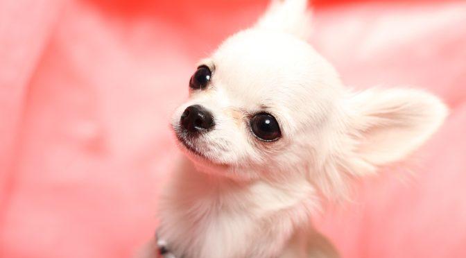 ペットロス体験談「突然の愛犬の旅立ち・最期は腕の中で見送ってあげたかった」