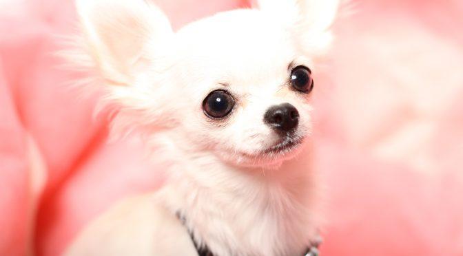 ペットロス電話相談「愛犬を亡くした辛さ・いつか楽しい思い出に感謝したい」