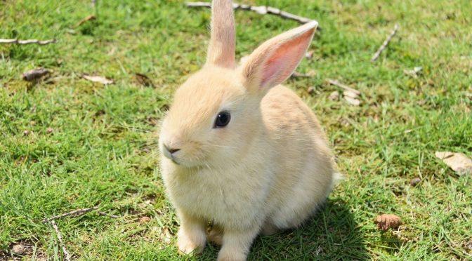 ウサギのちぃとかあちゃん・新しい形で一緒に歩いていく日々(2ヶ月後の変化①)