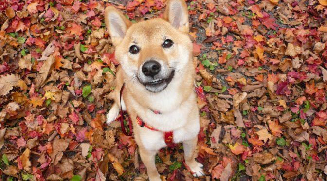 ペットロス相談「愛犬の百箇日に心がついていかない。それでも立ち直らなくてはダメ?」