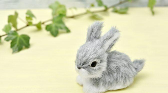 ウサギのちぃとかあちゃん・新しい形で一緒に歩いていく日々⑩