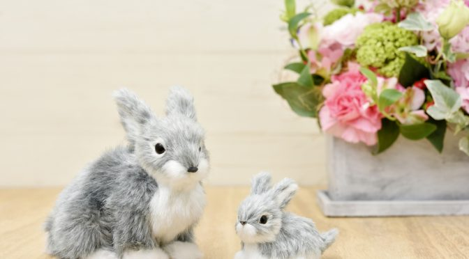 ウサギのちぃとかあちゃん・新しい形で一緒に歩いていく日々(2ヶ月後の変化④)