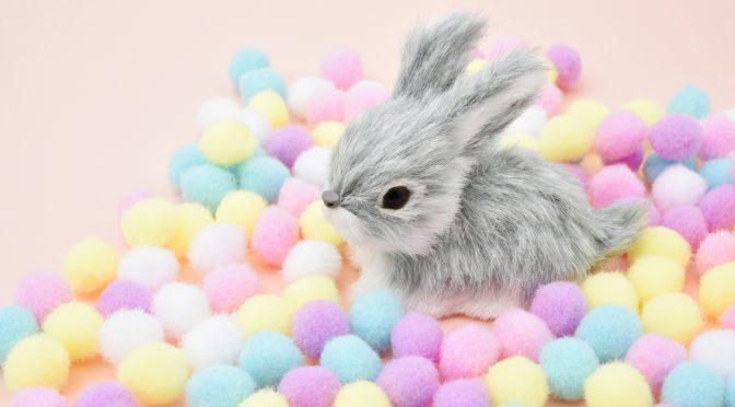 ウサギのちぃとかあちゃん・新しい形で一緒に歩いていく日々(2ヶ月後の変化②)