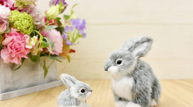 ウサギのちぃとかあちゃん・新しい形で一緒に歩いていく日々⑨