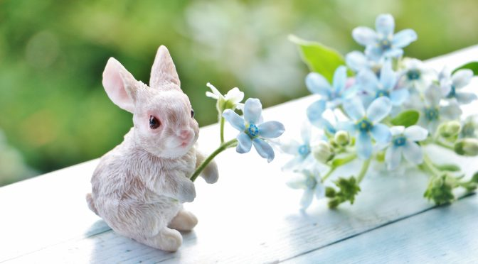 ウサギのちぃとかあちゃん・新しい形で一緒に歩いていく日々⑧