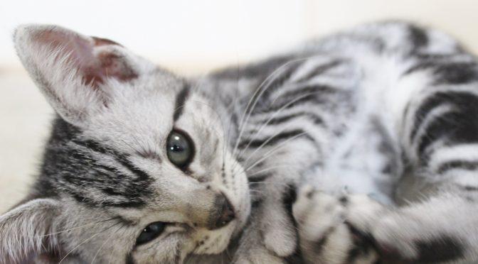 ペットロス相談体験談「大きな存在の愛猫が旅立ち、後悔、罪悪感が癒えない」