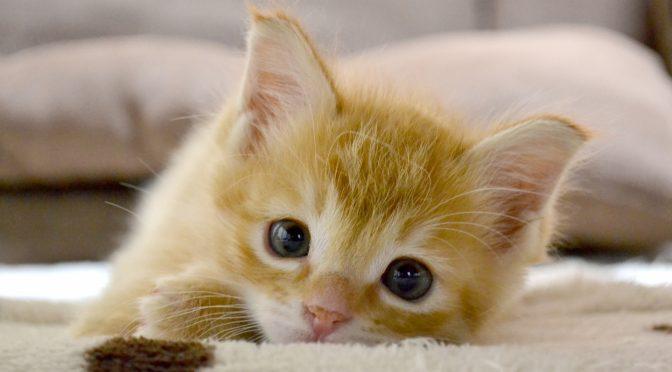 ペットロス体験談「4歳の愛猫くんを見送られたママの想い」