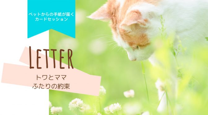 ペットロス「旅立った猫のトワ君がママに伝えた想い・トワとママとの約束」