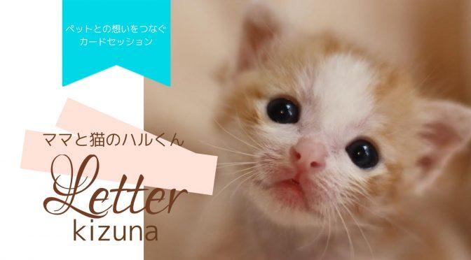 ペットロス絆Letter『ペットと想いが繋がるカードセッション・ママと猫のハル君(完結)』